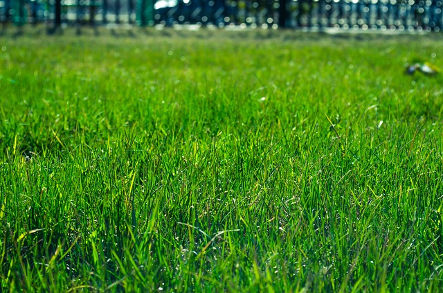 Synthetic Turf Supplies Allergy-Free Alternative to Grass